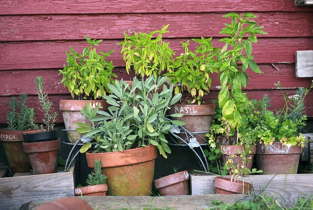 Why Grow Your Own Herbs?
